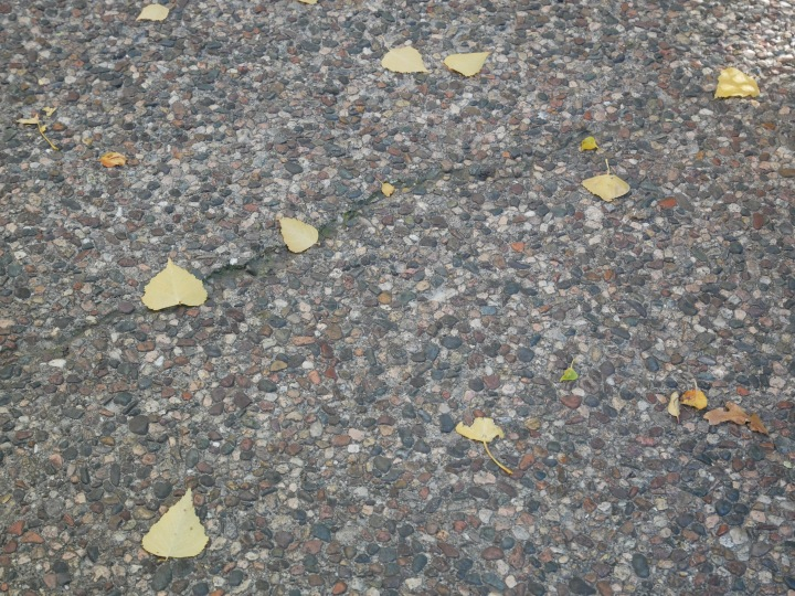 Northern Arizona Fall {Details Blog}
